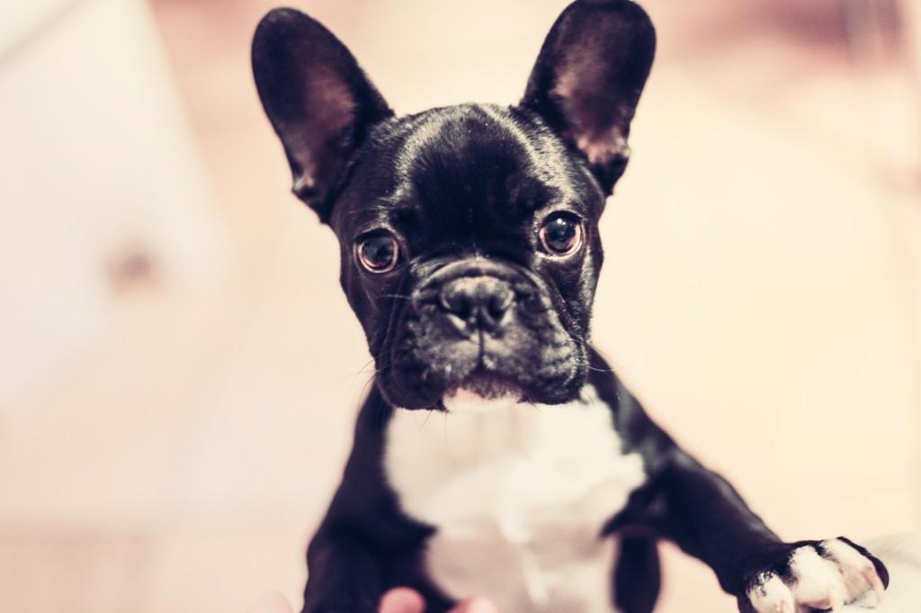 Fondation hve chien