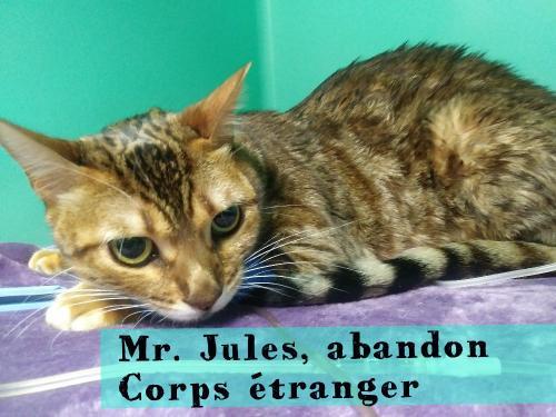 Mr. Jules